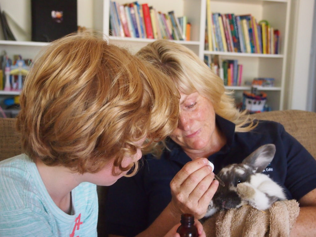 Kerrie Searle, Animal Communicator, working with Jack and Shadow the rabbit - www.animal-communicator.com.au