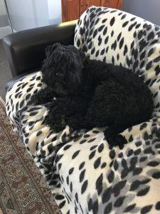 Image of Lyse, the dog (Marilyn Alborough testimonial)